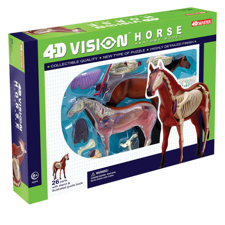4D Vision Horse Anatomy Model picture
