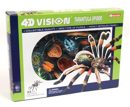 Theraphosidae  Tarantulas
