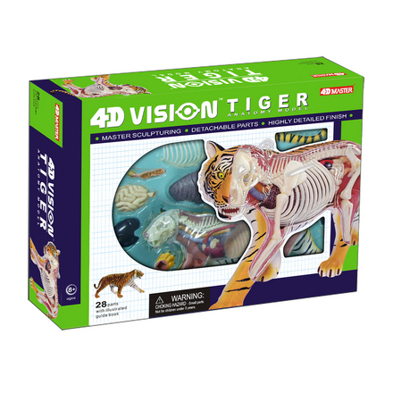 4D Vision Tiger Anatomy picture