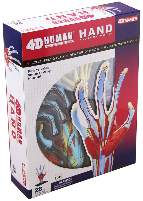 4D Human Anatomy Hand Model | TEDCO Toys ®
