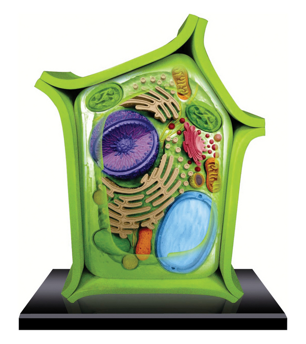 4d Science Plant Cell Model Tedco Toys