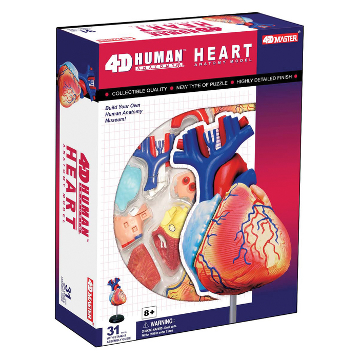 4-D Anatomy Heart Model | TEDCO Toys ®