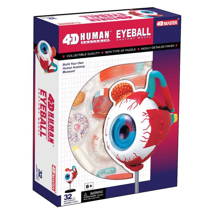 4d Anatomy Eyeball Model Tedco Toys