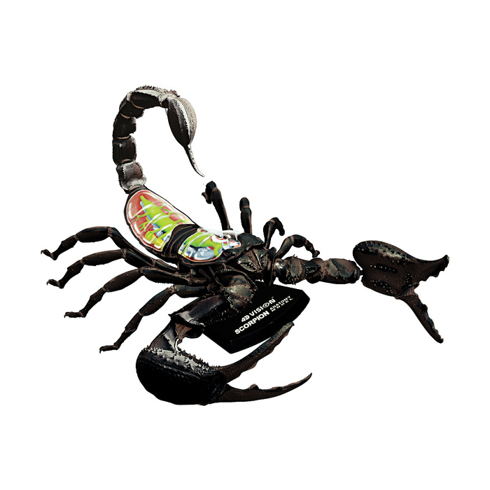 4D Vision Scorpion Anatomy Model | TEDCO Toys ®