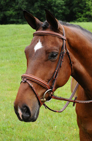 Arc De Triomphe Starman Bridle w/Raised Fancy Reins picture
