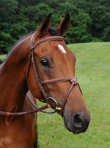 Arc De Triomphe� Imperial Figure 8 Bridle w/Raised Fancy Rubber Reins picture