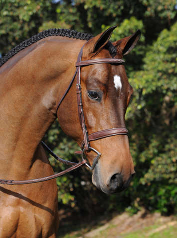 Arc De Triomphe Tribute Bridle w/Raised Fancy Laced Reins picture