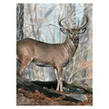 CPN21 - COLOUR BY # PENCIL WHITETAIL BUCK