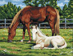 PCL2 - HORSES CANVAS PAINTING