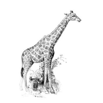 SKMIN-108 - GIRAFFE MINI SKETCHING MADE EASY picture