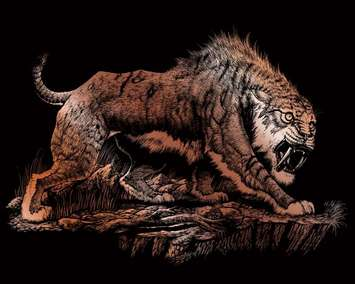 COPF26 - COPPER ENGRAVING SABRETOOTH picture