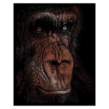 COPF32 - COPPER ENGRAVING THE WISE SIMIAN picture