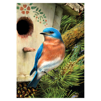 PBNMIN-116 - EASTERN BLUEBIRD MINI PBN picture