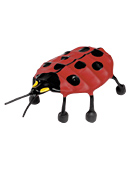 Lady Bug picture
