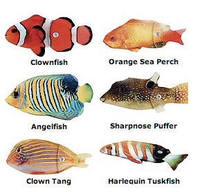 Tropical Fish Fridge Magnets picture