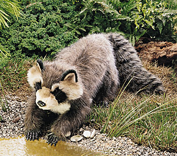Raccoon, Large picture