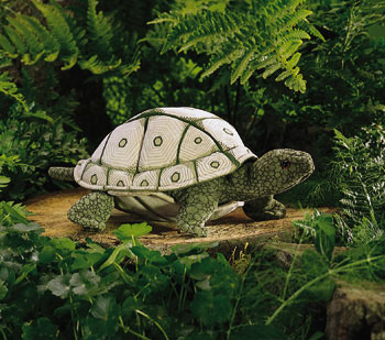 Tortoise picture