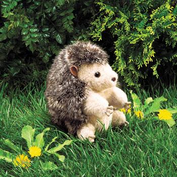 Hedgehog picture