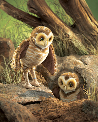 Owl, Burrowing picture