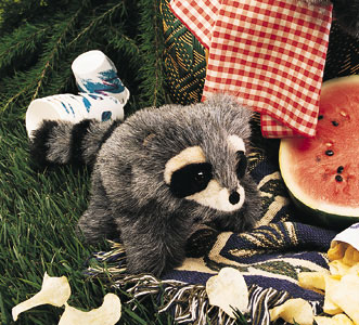 Raccoon, Baby picture