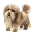 Dog, Shaggy