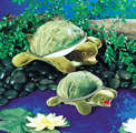 Turtle, Baby