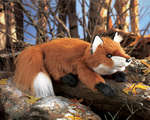 Fox, Small Red