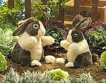 Rabbit, Dutch