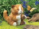 Kitten, Orange Tabby