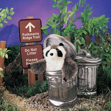 Raccoon In Garbage Can picture