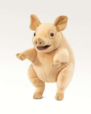 Piggy picture
