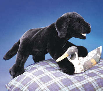 Labrador Puppy, Black picture