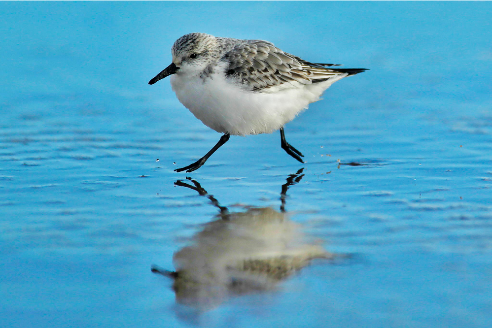 10 Tips for Better Bird Photography - Water Bird
