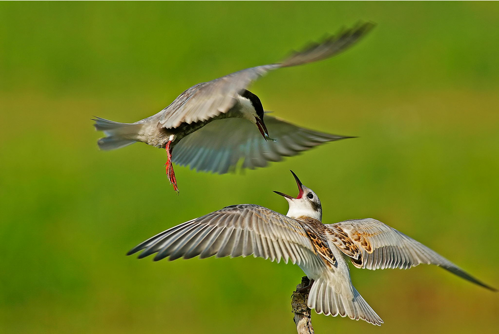 10 Tips for Better Bird Photography - Motion