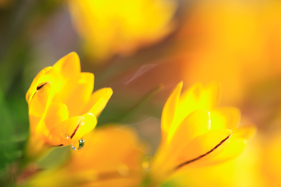 Photo - 5 Tips for Great Flower Macro Photographs - Change Your Point of View