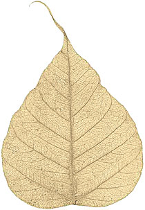 "Boda Tree Leaves - 4"" - Gold picture"
