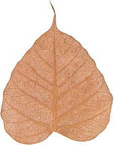 "Boda Tree Leaves - 4"" - Copper picture"