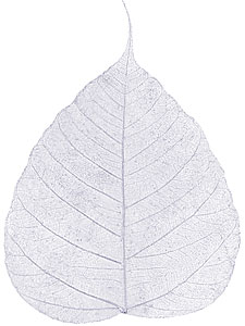 Boda Tree Leaves - 4&quot; - Silver picture