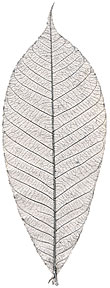"Rubber Tree Leaves - 1.5"" - Silver picture"