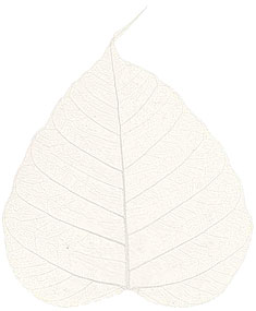 "Boda Tree Leaves - 4"" - Natural picture"