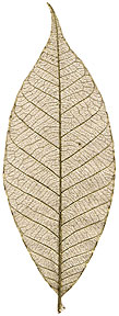Rubber Tree Leaves - 3&quot; - Gold picture