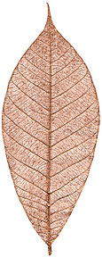 "Rubber Tree Leaves - 5"" - Copper picture"