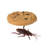 Cookie Surprise