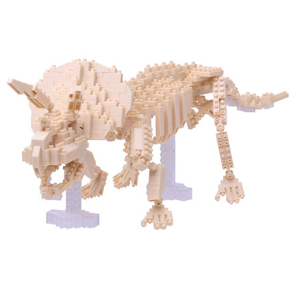 Triceratops Skeleton Model picture