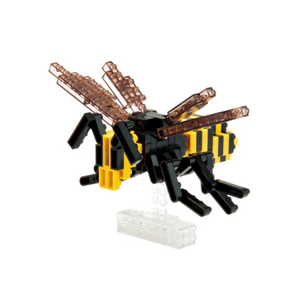 Asian Giant Hornet picture