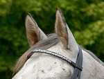 Blue Leaf Browband