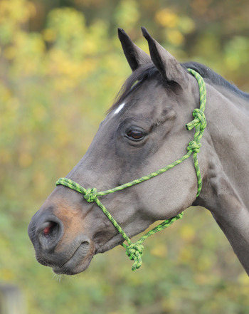 Rope Halter picture
