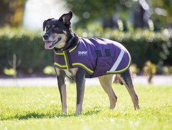 Waterproof Dog Coats picture