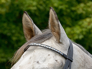 Blue Leaf Browband picture