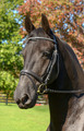 Double Diamond Browband